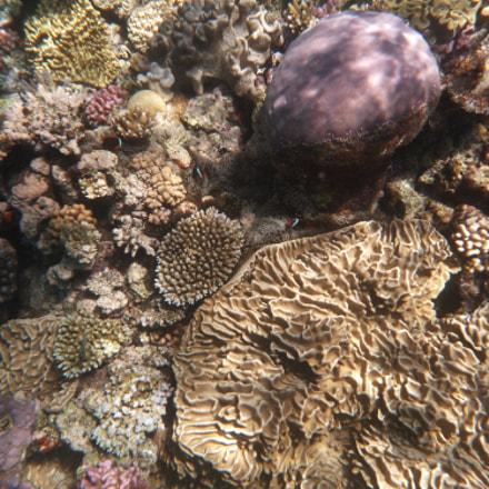 Great Barrier Reef II, Panasonic DMC-FT4