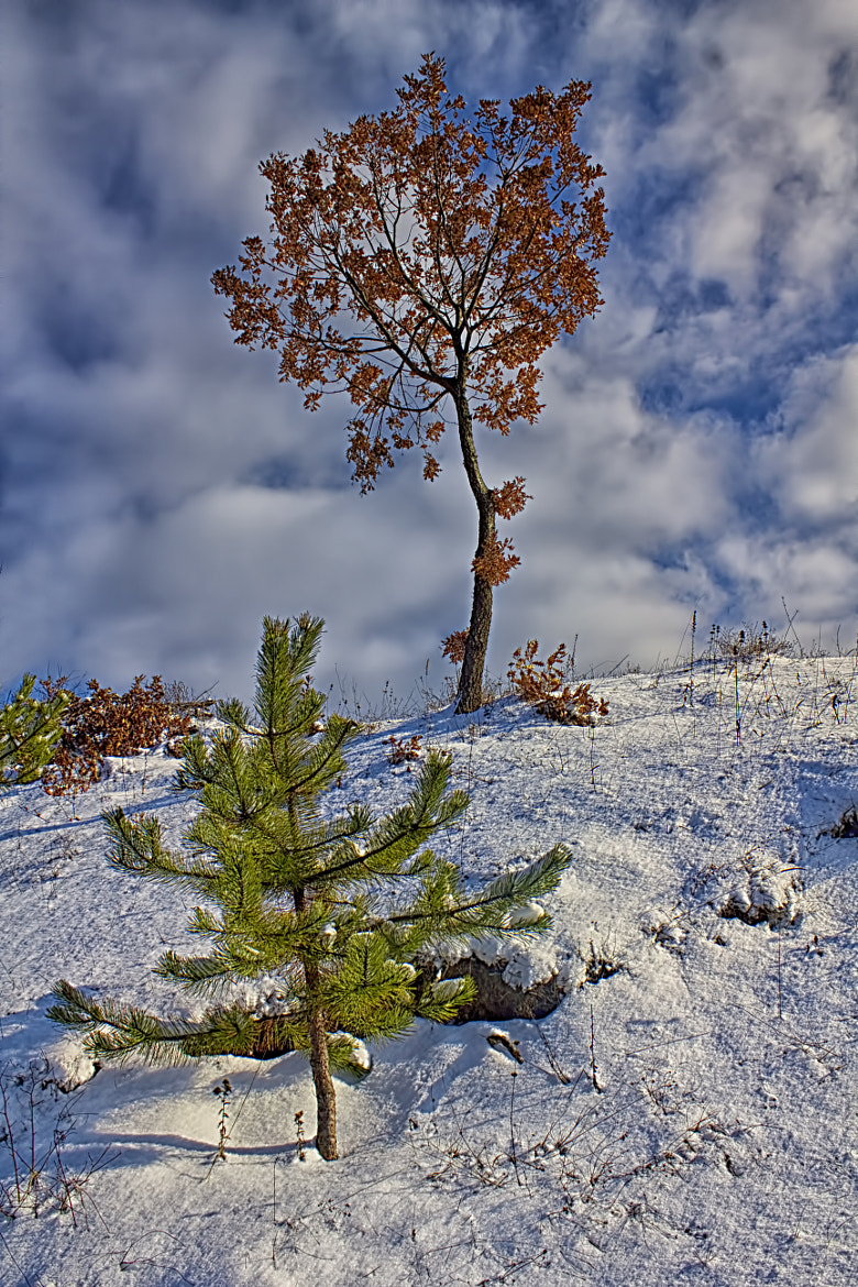 Photograph Winter colors by Vendenis   on 500px
