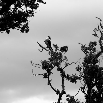 Bird in Trees, Canon POWERSHOT G6