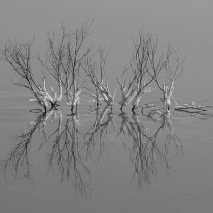 Untitled, Nikon E5700