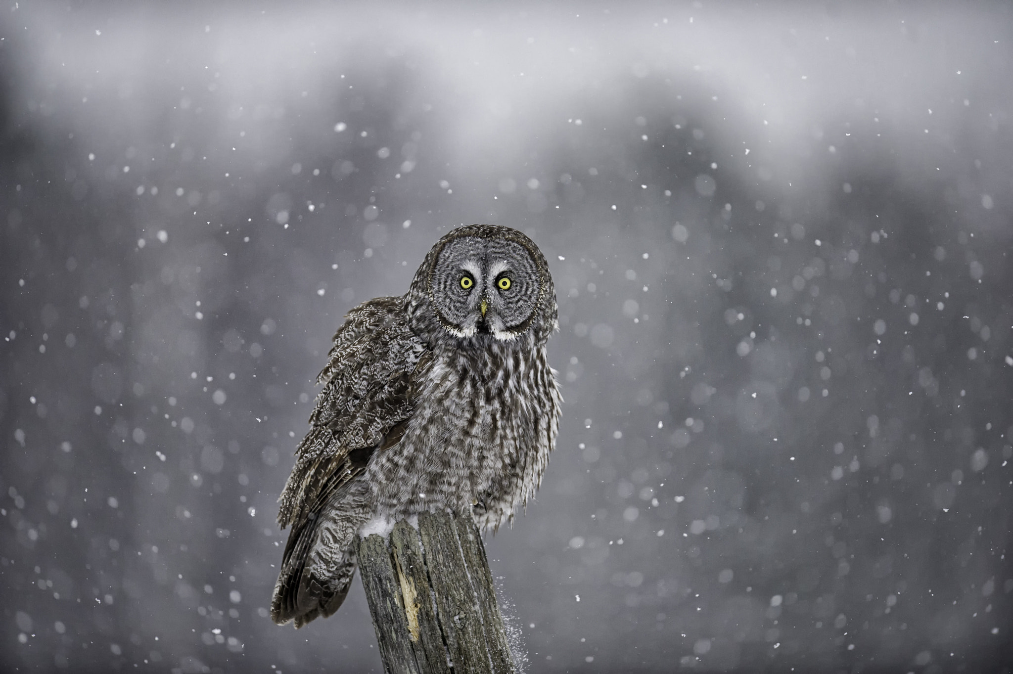 Photograph In the Snow by Daniel Parent on 500px