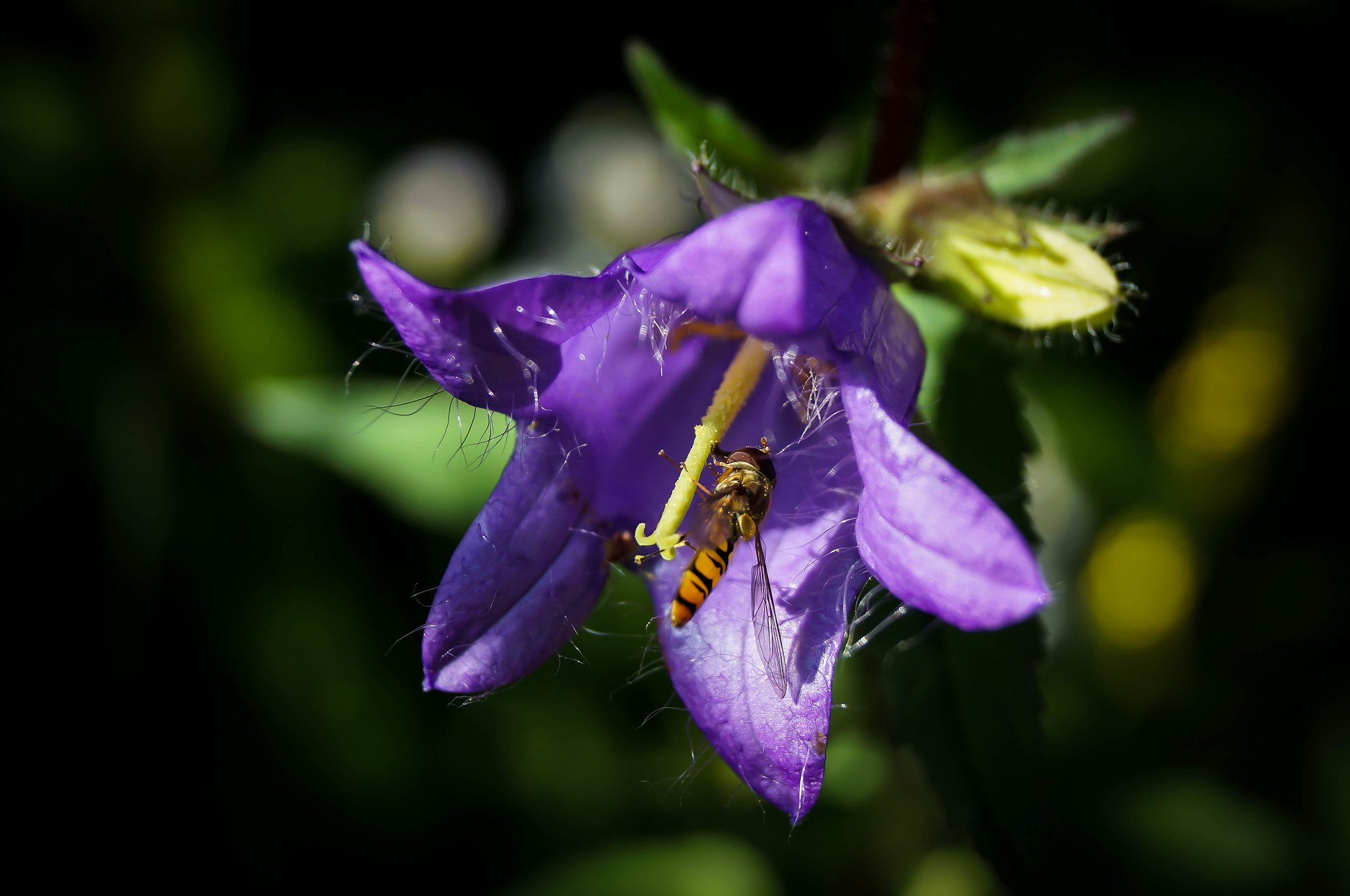 Photograph Flower and Bee by Ralf Bessoth on 500px