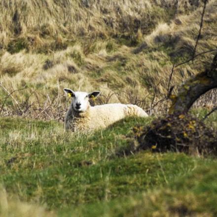 Le mouton sur la, Fujifilm FinePix S8600 S8650 S8630