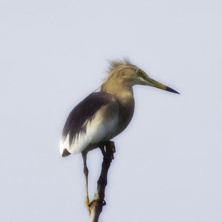 Bird, Fujifilm FinePix S6800