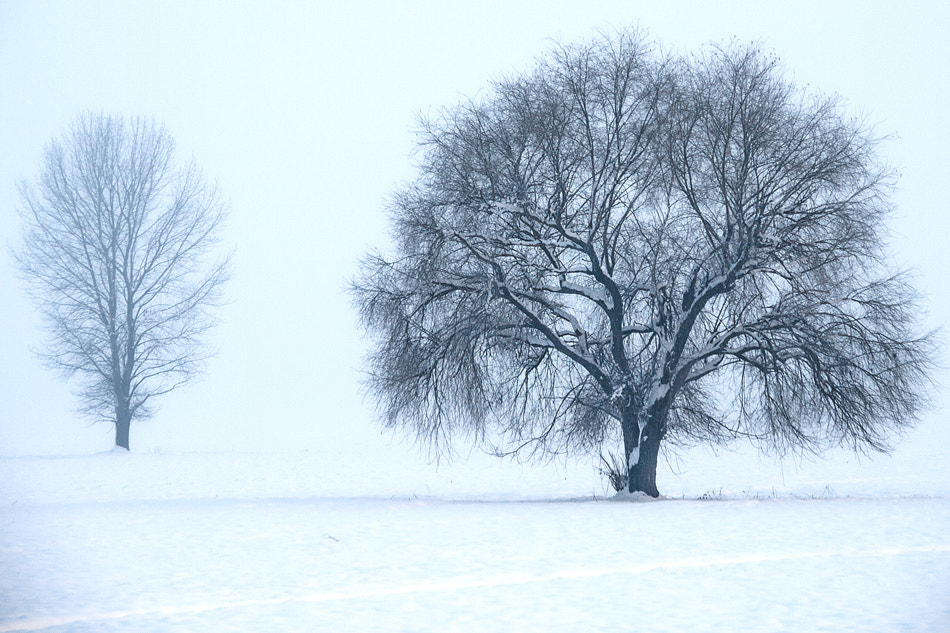 Photograph Snow and fog... by Hristofor Tashev on 500px