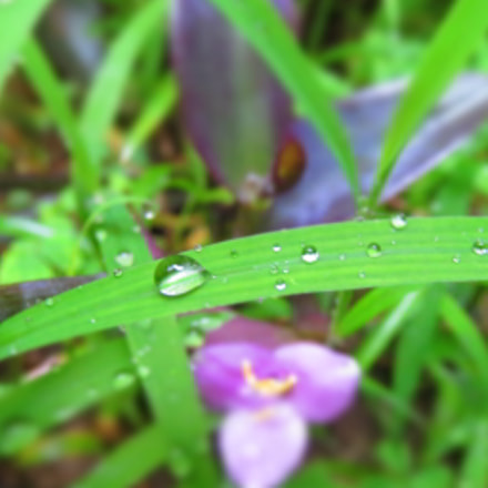 Water  Droplets ., Canon IXUS 510 HS