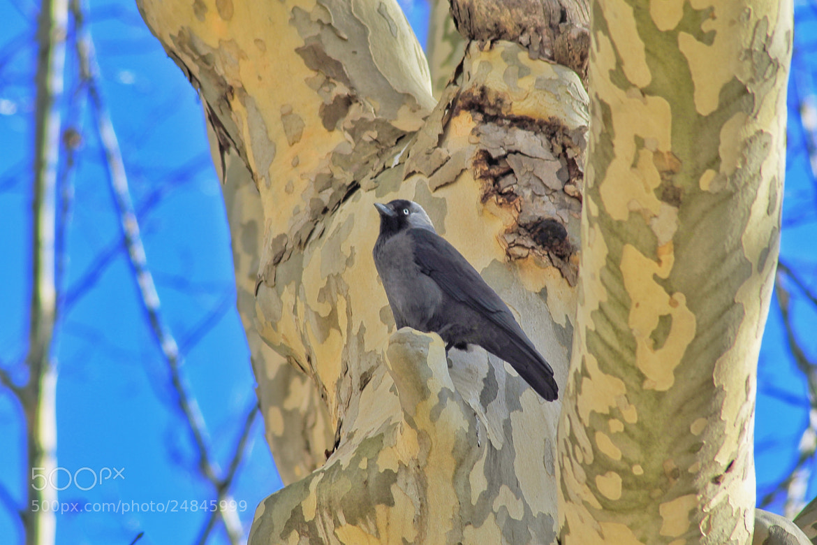 Photograph master bird perched on a tree by richard cauchy on 500px