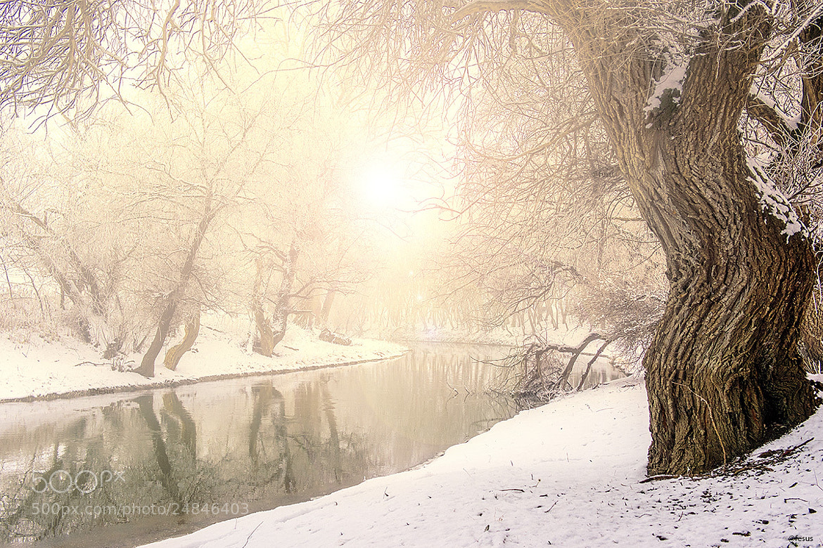 Photograph Surise foggy winter landscapen by F Levente on 500px