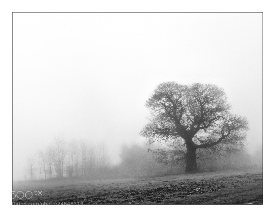 Photograph fog by mauro maione on 500px