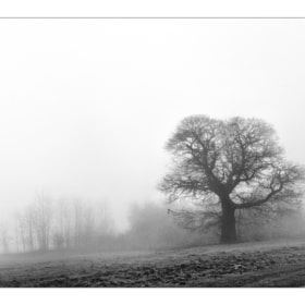 fog by mauro maione (marveros)) on 500px.com