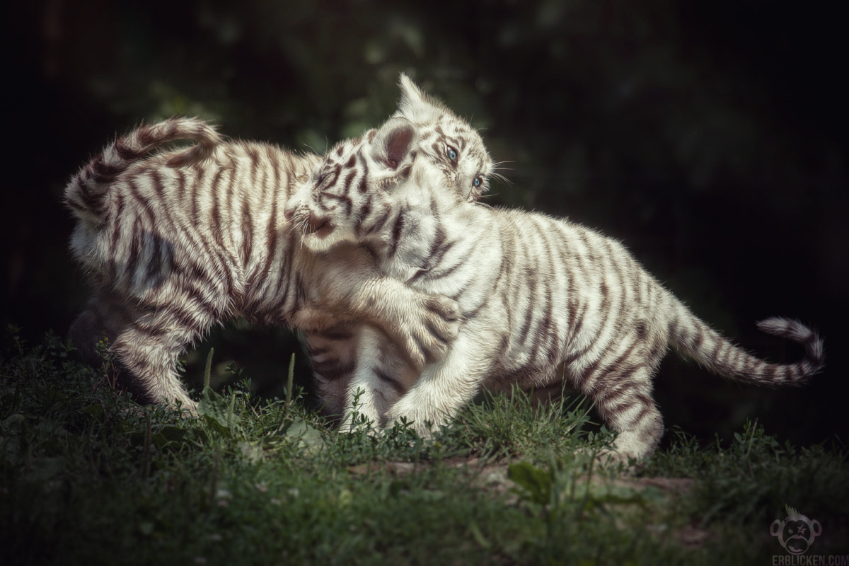 Photograph Little jungle spirits by Manuela Kulpa on 500px