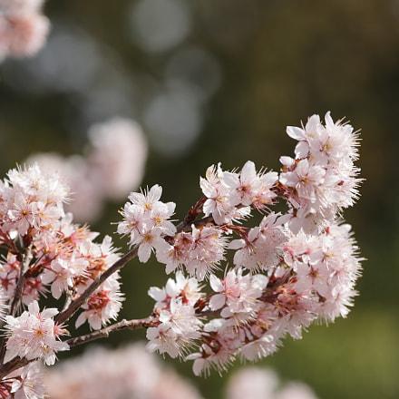 Sakura, Canon EOS 5D