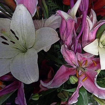 flores 8, Sony DSC-H90