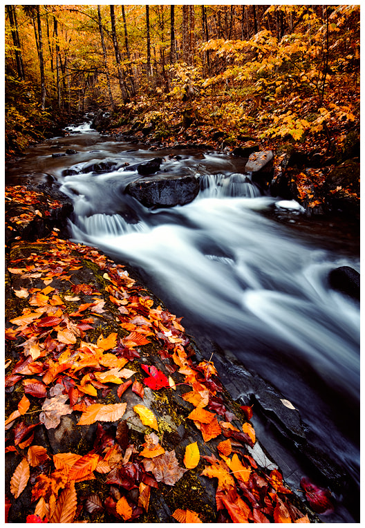 Photograph Oregon Brook Autumn by Joseph Rossbach on 500px