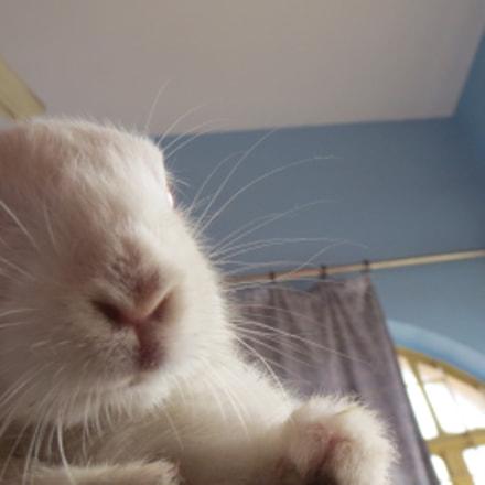 Astonised Bunny, Canon IXUS 510 HS