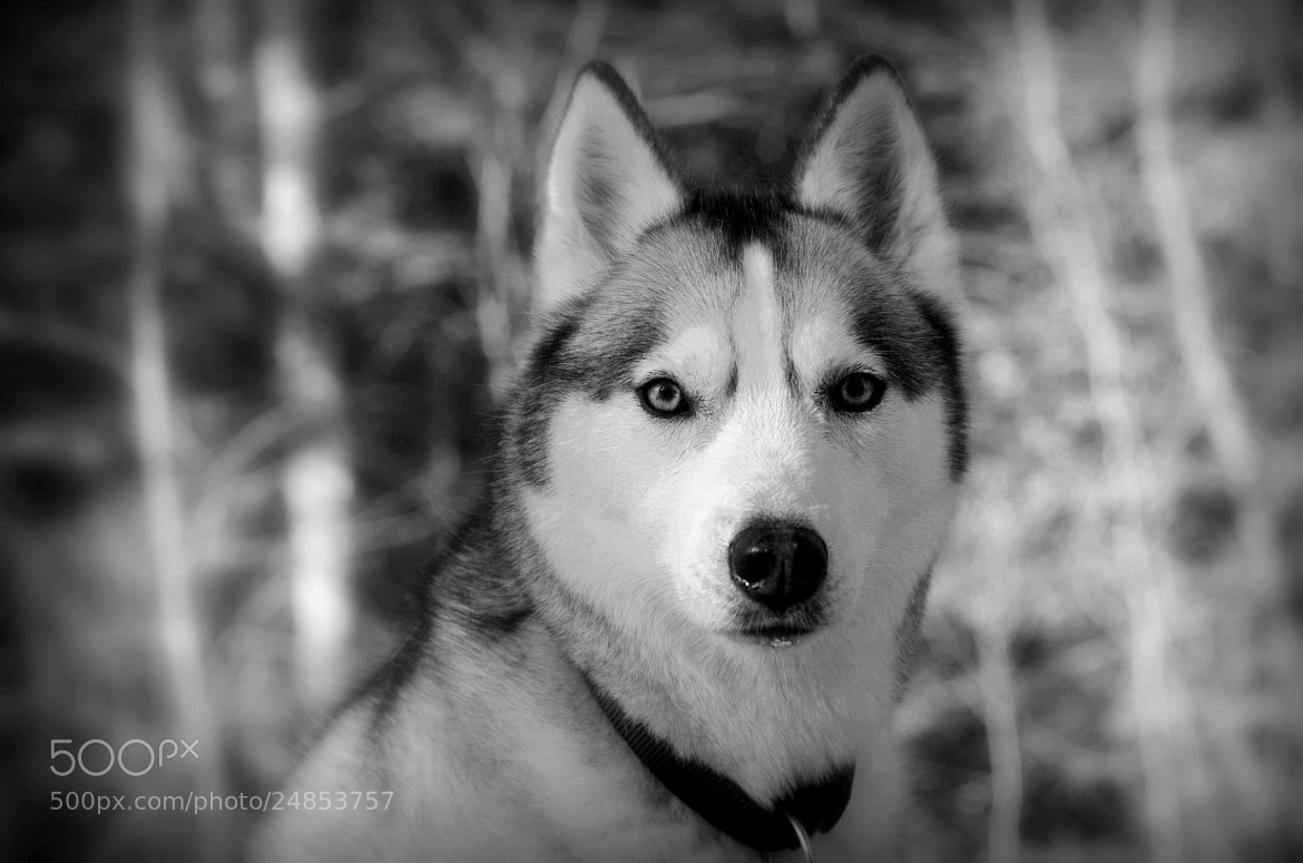 Photograph Niko by Eric Le Bel on 500px