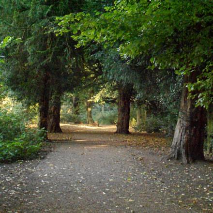 Richmond Park, Nikon COOLPIX S3100