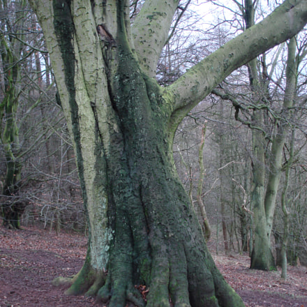 Two tone tree, Sony DSC-W100