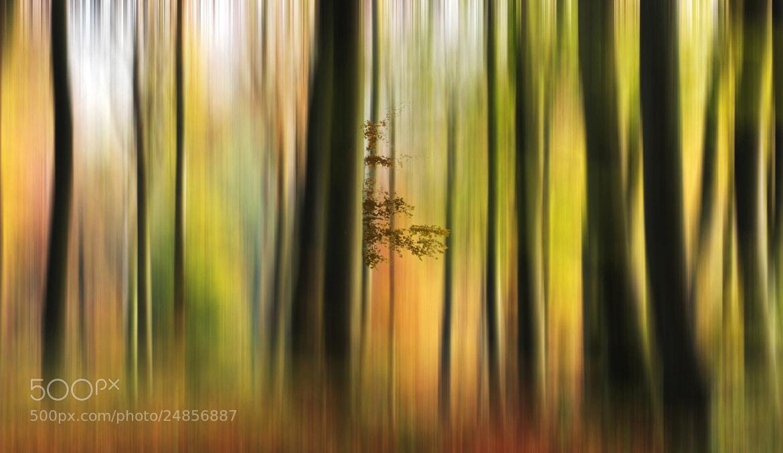 Photograph Autumn Colours by Ceri Jones on 500px