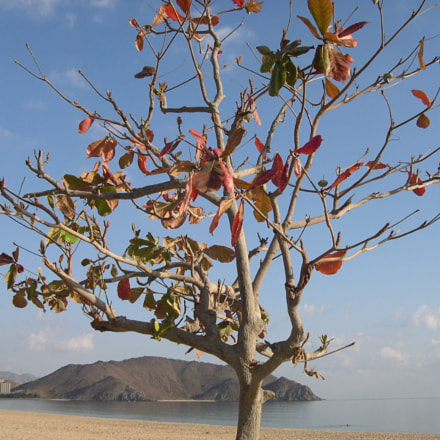 Tropical tree, Nikon E4300