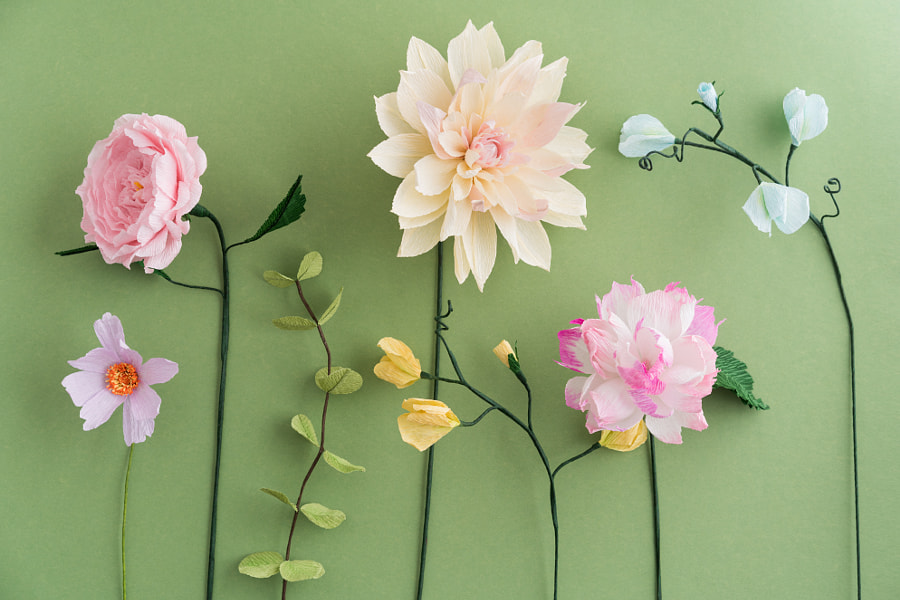 Crepe paper flowers by Elisabeth Coelfen on 500px.com