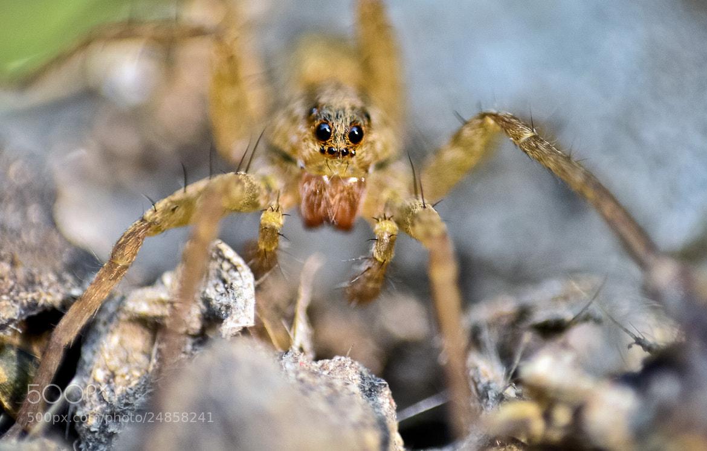 Photograph Hello !! by Saswata Roy on 500px