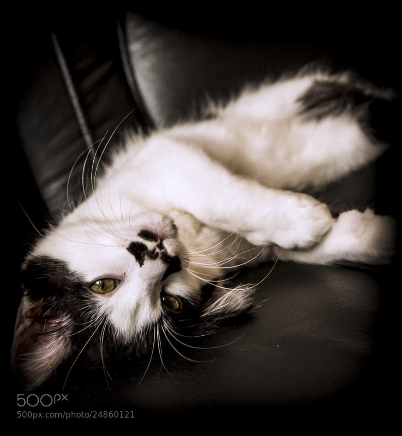 Photograph Little Leopoldo by Vitor Pavan on 500px