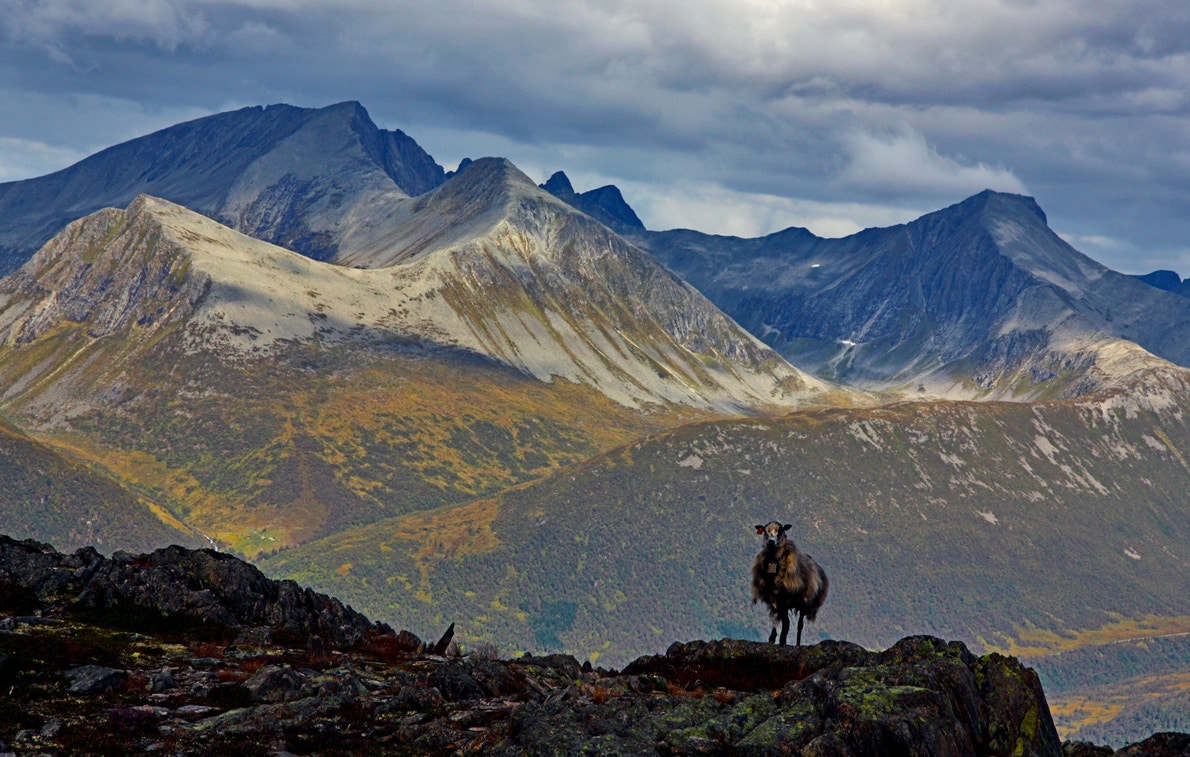 Photograph the good life in the mountains by Fred Strømme on 500px