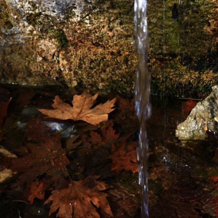 Les feuilles mortes ..., Canon EOS 70D, Canon EF 14mm f/2.8L II USM