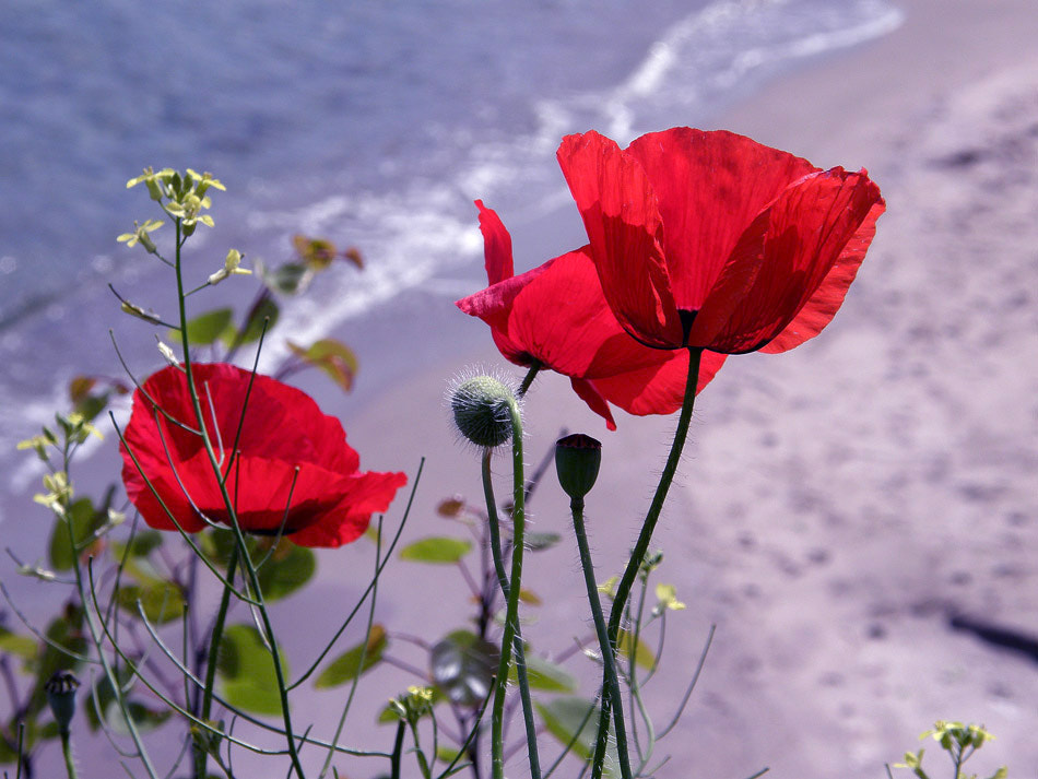 Photograph Looking for the Summer~~~ by Lina,  Bulgaria on 500px
