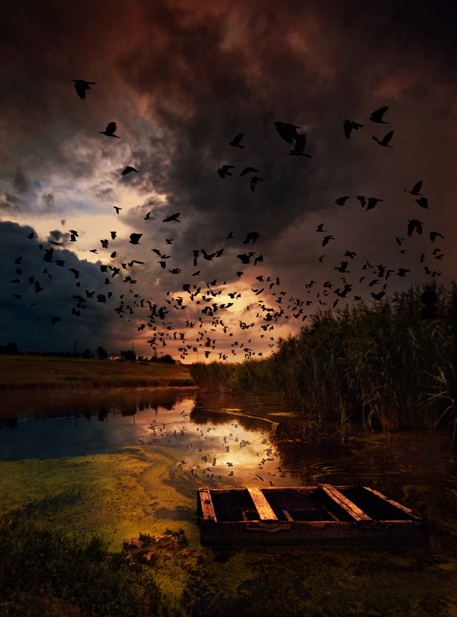 Photograph crows flying by alexandru popovschi  on 500px