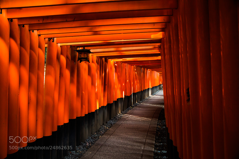 Photograph Fushimi Inari by Eric Akaoka on 500px