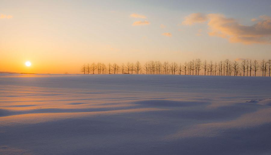 500px.comのKousuke Toyoseさんによる日の出の防風林