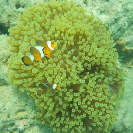 Nemo Fish, Nikon COOLPIX W100