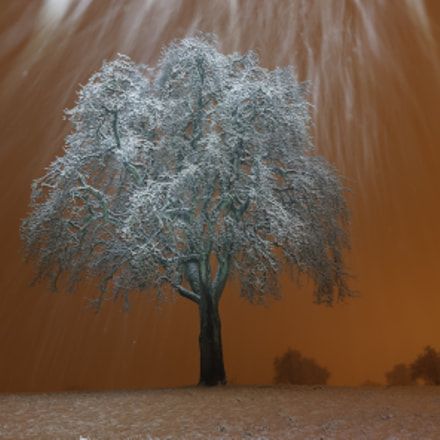 Birnbaum im Schnee, Sony ILCE-7M2, Tamron SP 24-70mm F2.8 Di USD