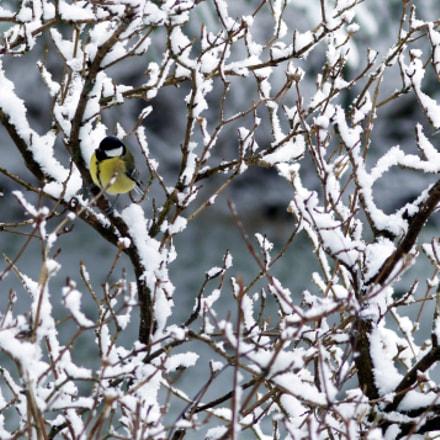 birds in snow, Sony DSLR-A550, Sigma AF 105mm F2.8 EX [DG] Macro