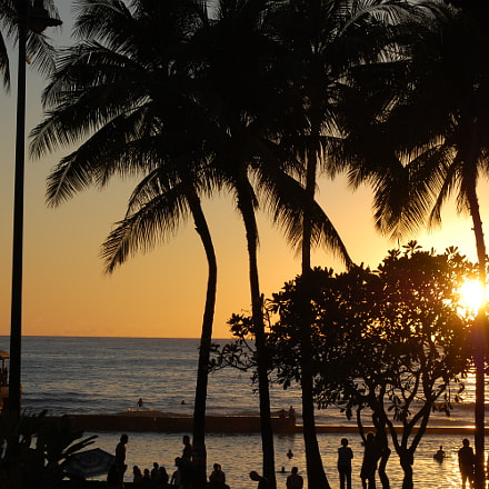 Sunset Palms, Nikon D40, AF-S DX VR Zoom-Nikkor 18-55mm f/3.5-5.6G