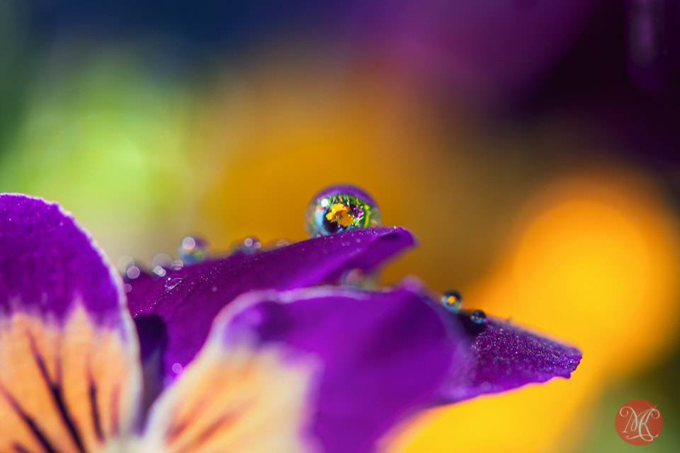 Photograph Late summer 1 by Kasia Sokulska on 500px