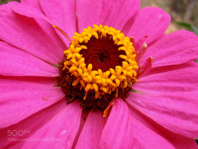 Photograph Beautiful pink by Snezana Petrovic on 500px