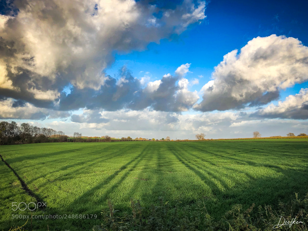 Shadows on the fields