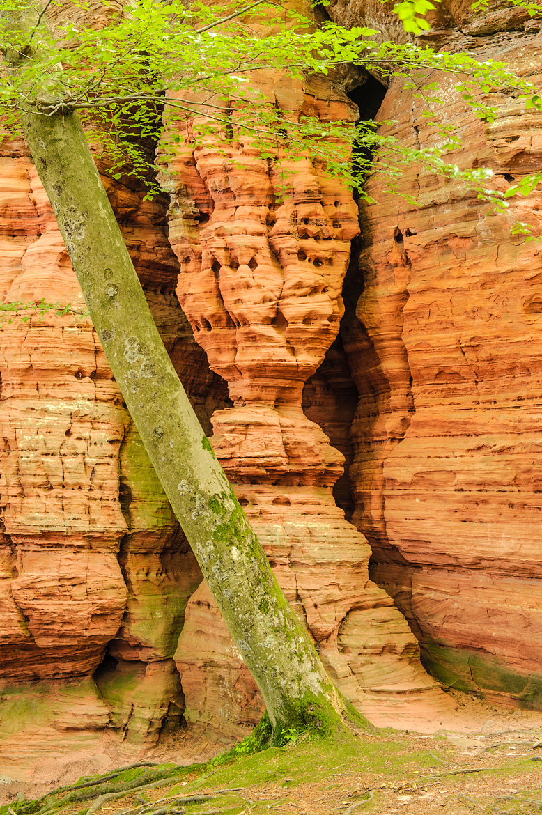 Photograph Rock and Tree by Frank Hofmann on 500px
