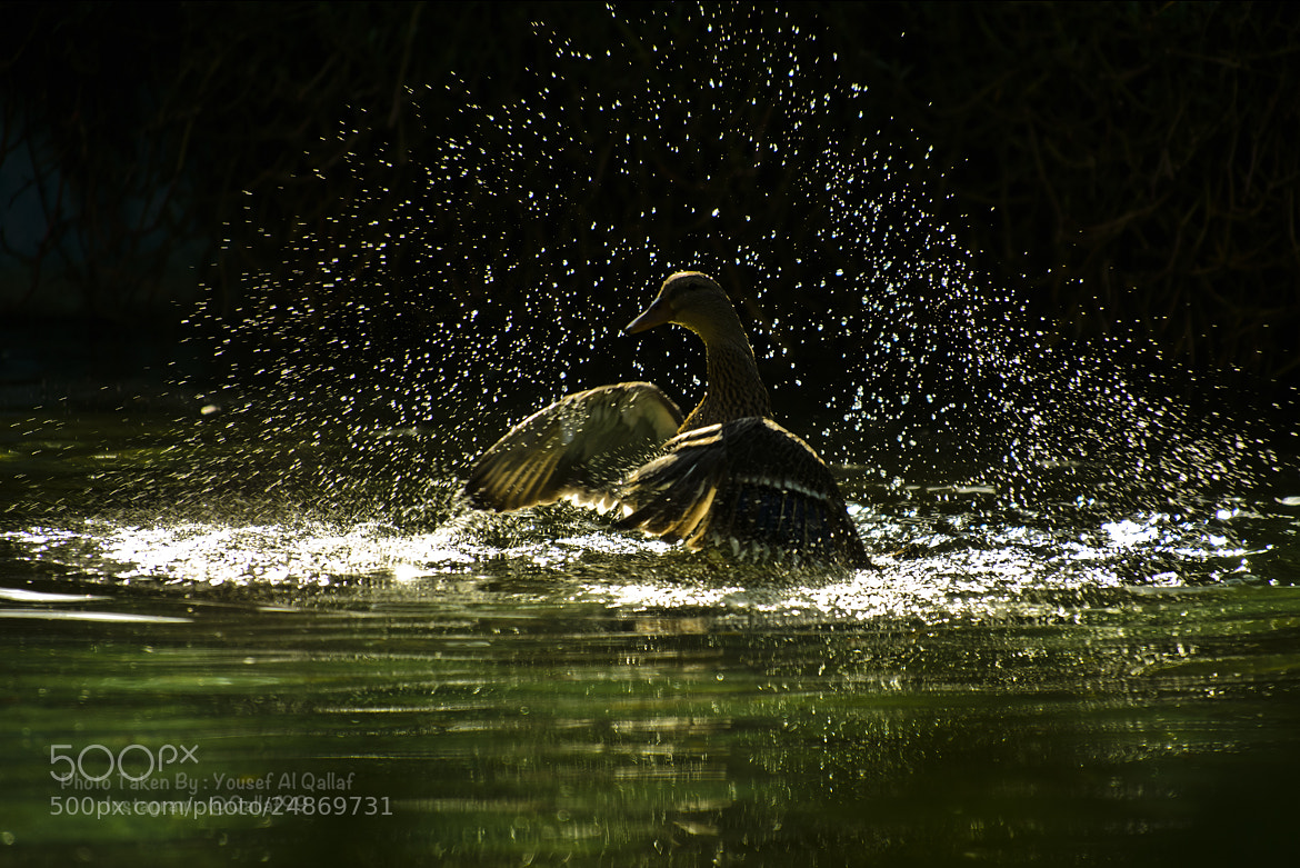 Photograph Splash by Yousef Al Qallaf on 500px