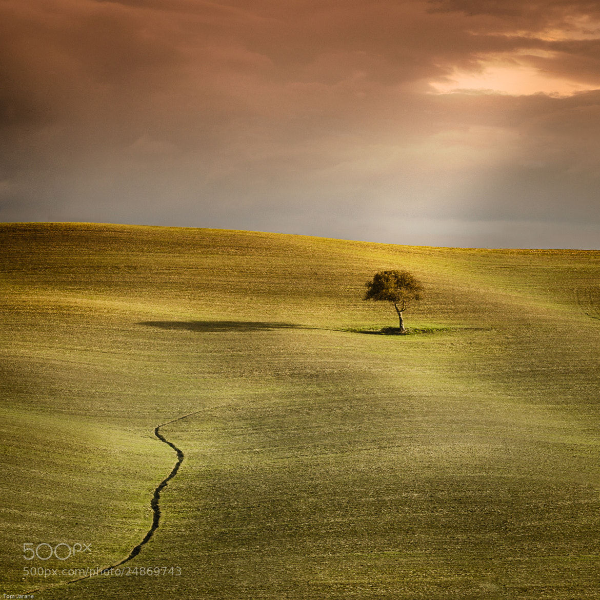 Photograph Tuscan tree v3 by Tom Jarane on 500px
