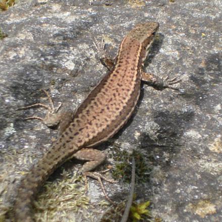 Reptile, Sony DSC-W100