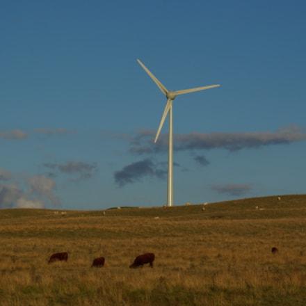 Green energy, Pentax K10D, Sigma 70-300mm F4-5.6 Macro