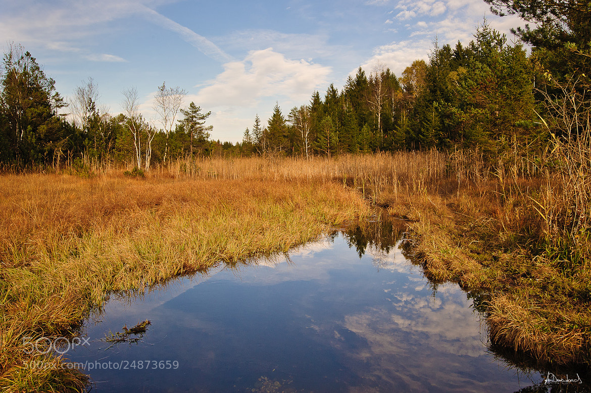 Photograph Moorbach by Alexander Derenbach on 500px