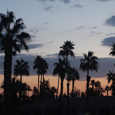 Somewhere in Palm Springs, Nikon D50