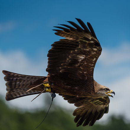 Fly eagle fly (1)