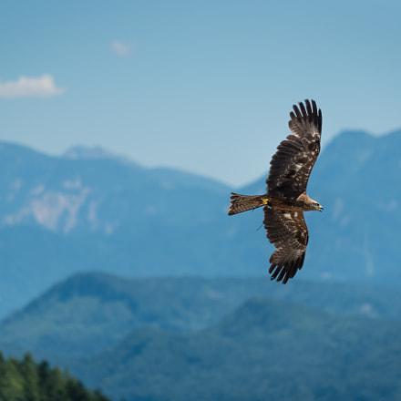 Fly eagle fly (2)