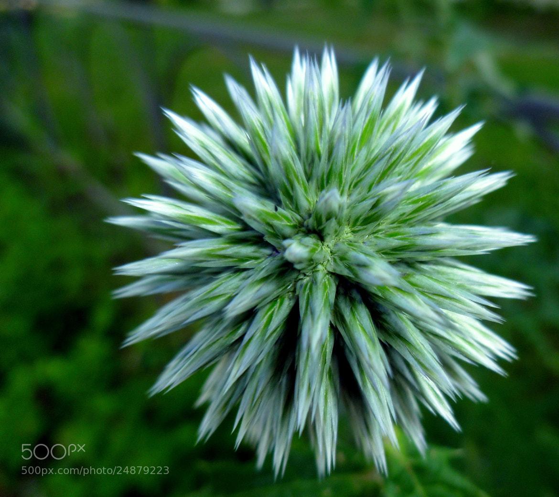 Photograph Mesmorizing flower by Gopal Kumarappan on 500px